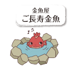 金魚屋 ご長寿金魚