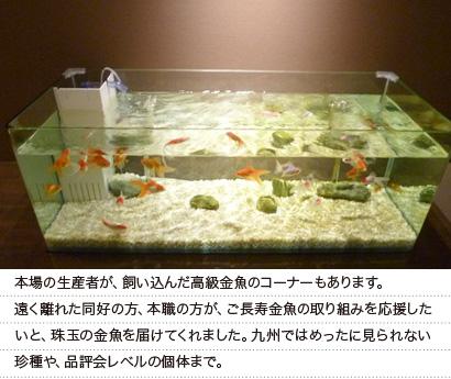 奈良、大和郡山金魚師コーナー